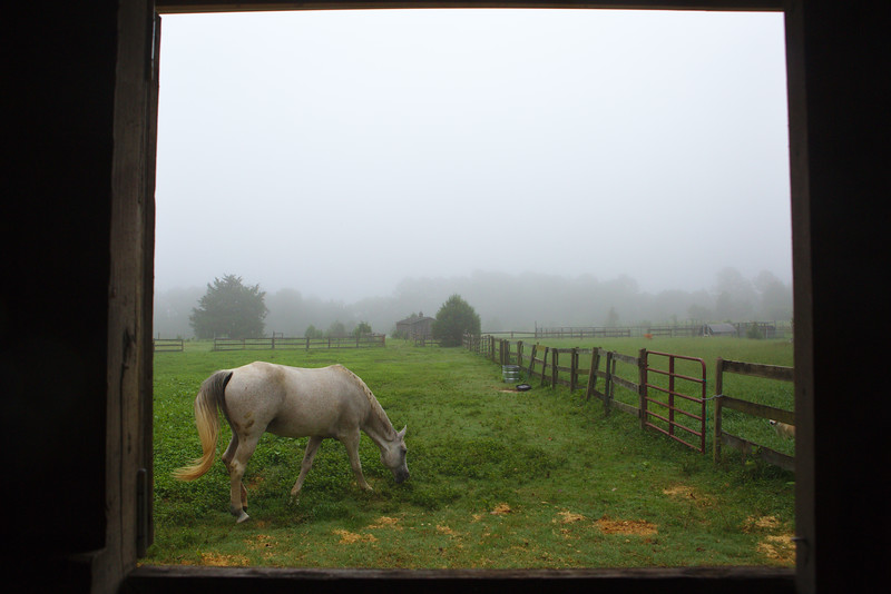 A misty morning with Bonnie