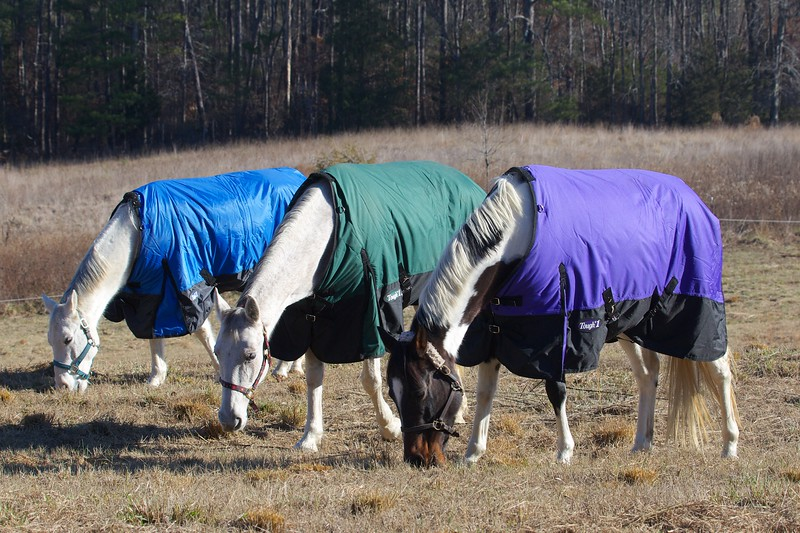 Ashby, Bonnie and Missy staying warm in the pasture