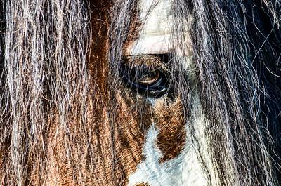 iron horse farm 438