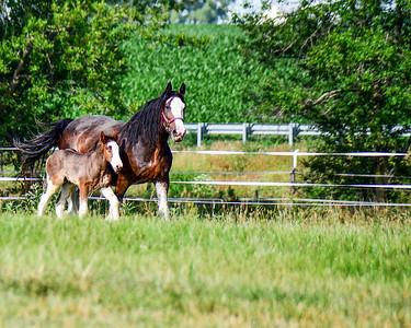 aIron horse babies 718