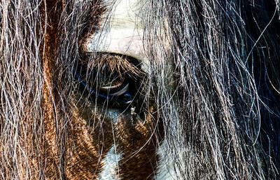 iron horse farm 440