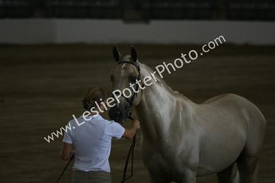 2009 Arabian Sport Horse Nationals, Lexington, KY