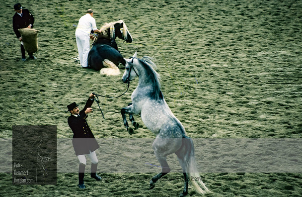 Once Upon A Time: A scanned Treasure.   Enjoy my Stallion Parade impressions captured October 1990 at the Haupt- und Landgestuet Marbach with a Minolta Dynax 7000i and a Minolta AF 70-210/3.5-4.5 on slide film, scanned and edited in Adobe Photoshop Lightroom. In case you wish to view my preferred view of the parade click Stallion Parade at Haupt- und Landgestuet Marbach.