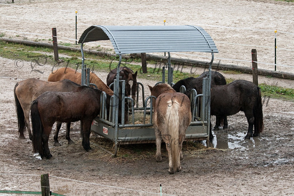 Two hay feeders in this paddock allows every horse to eat peacefully.