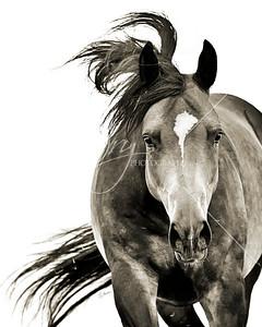 Equine Art Prints