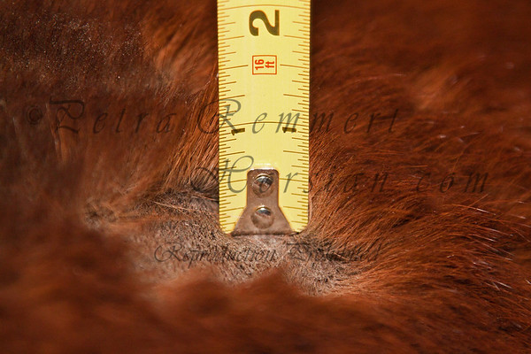 Jan 06, 2011 in Minnesota, USA  His approximate fur length in inch at torso.