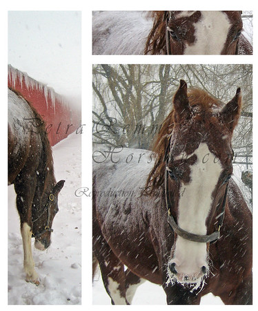 Dec 23, 2007  American Saddlebred at -13°C in Minnesota