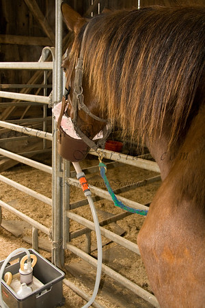 Inhaling in Spring 09 due to a cough that affected various horses.