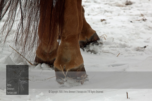 For a possible solution for ice accumulation created by snow being stuck and compressed in the shoe please have a look at Hoof: Winterizing.