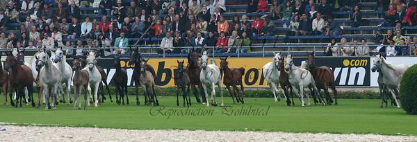 FEI World Equestrian Games Aachen 2006