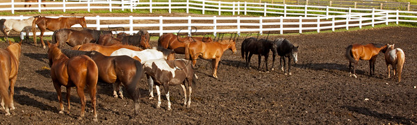 """When watching the horses one evening, not long before sunset, the surprise was big!  They were not standing in couples """"head close to the tail of each other"""" but rather stuck their heads together and used the tails to clear the bugs from their hinds."""