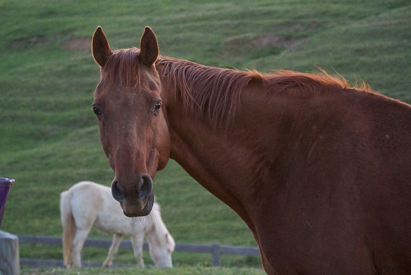 YBR Farm Horses