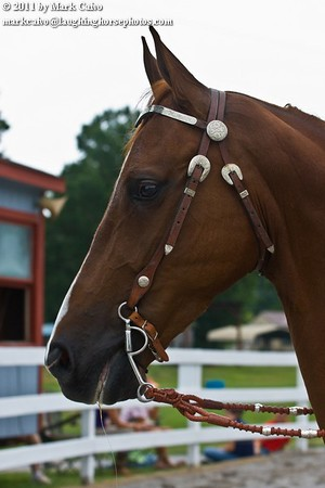 This is A Slash Of Fire a young Saddlebred who is already well placed nationally.
