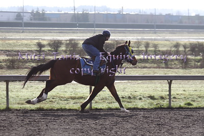 Morning works at Emerald Downs 2-14-2015