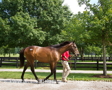 Hip #281, Awesome Again - Grecian Lover '10