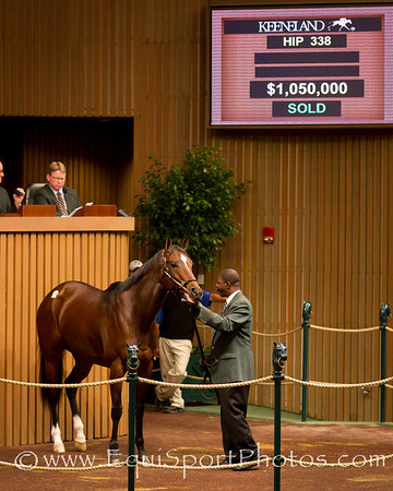 Gypsy's Warning Hip 338 at the Keeneland November Sale on 11.08.2011