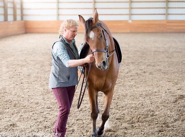 Enlightened Equestrian