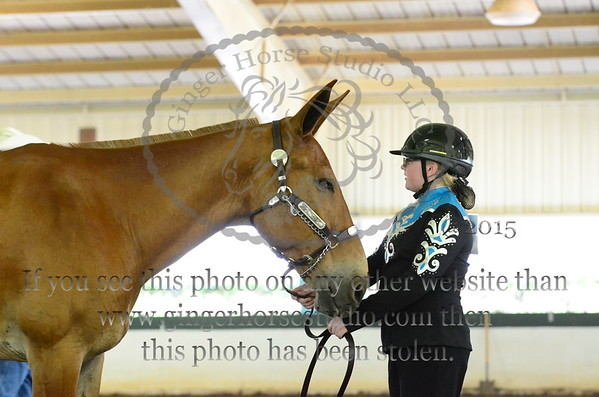 NC State 4-H Show July 8-12, 2015