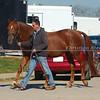 ATA Stallion Favian *Ps*