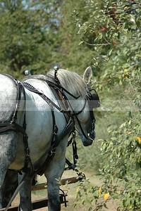 Cavalry3336 (2)
