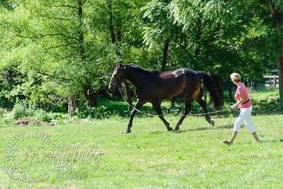 Loudoun Horse Show-12