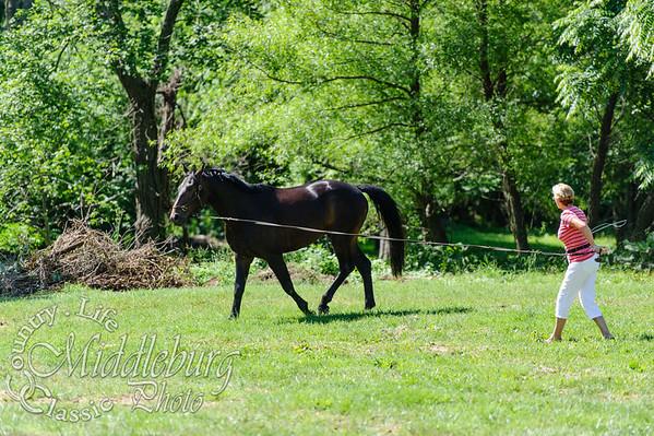 Loudoun Horse Show-4