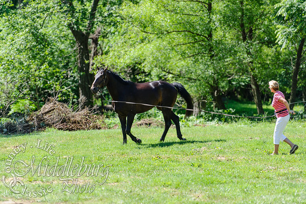Loudoun Horse Show-5