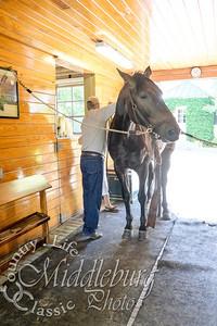 Loudoun Horse Show-35