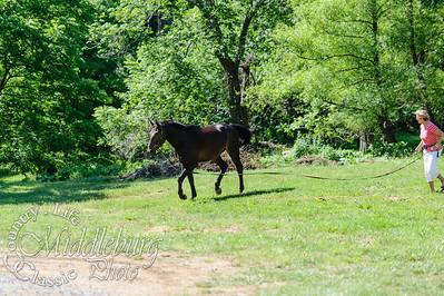 Loudoun Horse Show-6