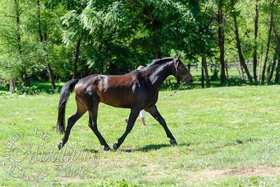 Loudoun Horse Show-9