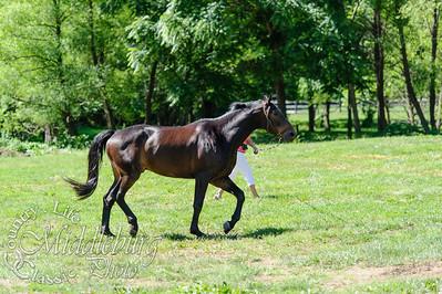 Loudoun Horse Show-8-2