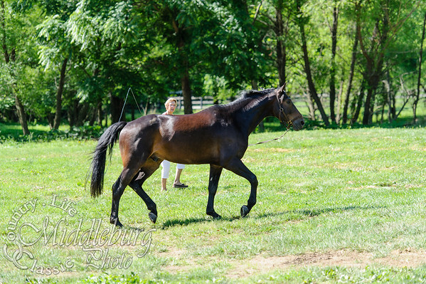 Loudoun Horse Show-11