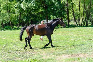 Loudoun Horse Show-10-2