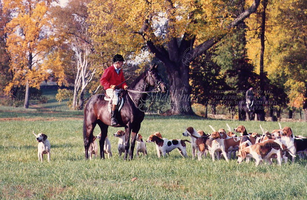 Albert with hounds Willow Oaks