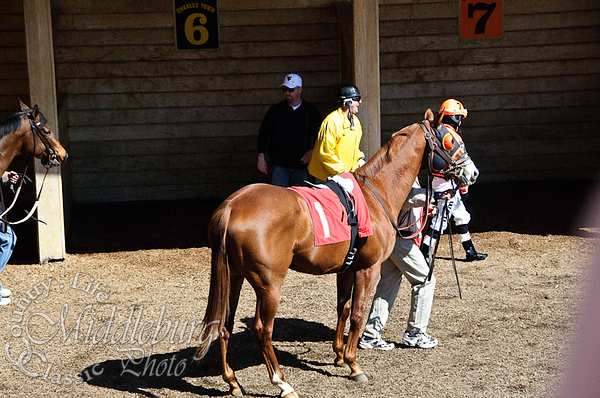 Allaboutthedream-Red Tail-Baltic Gold by Forty Niner, Trainer Jean L. Rofe  Maiden 4 1/2 furlongs