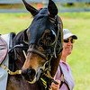 middleburg point to point -76