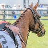 middleburg point to point -82