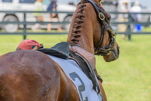 middleburg point to point -81