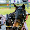 middleburg point to point -75