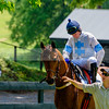 middleburg point to point -204