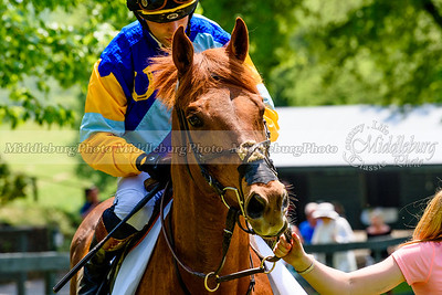 middleburg point to point -217