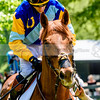 middleburg point to point -218