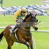 middleburg point to point -564