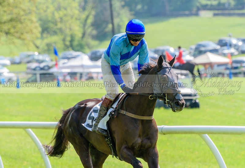 middleburg point to point -623