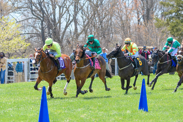 Spring Races D500-60