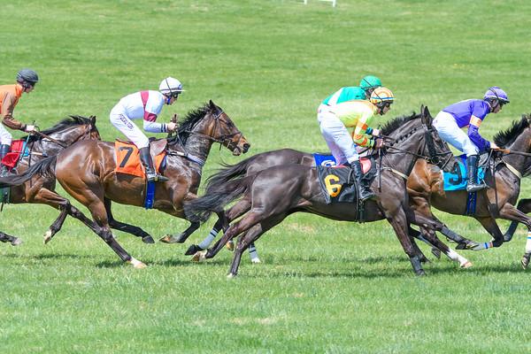 Spring Races D500-37