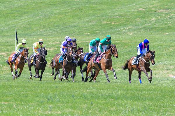 Spring Races D500-29