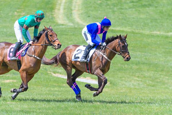 Spring Races D500-30