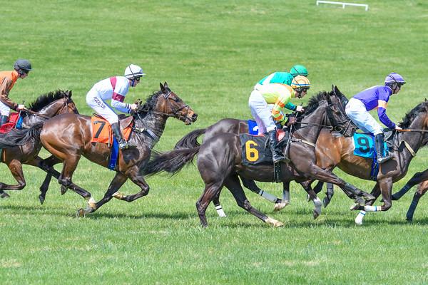 Spring Races D500-36