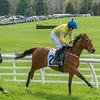 Spring Races D500-587